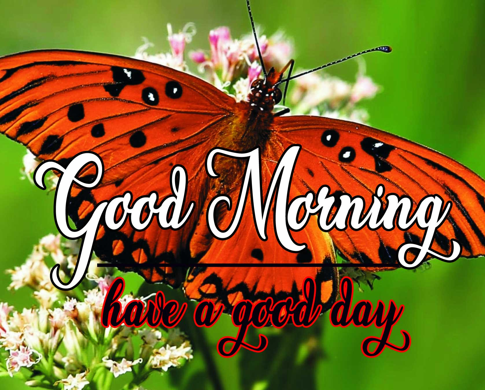 Butterfly Good Morning Wallpaper Download