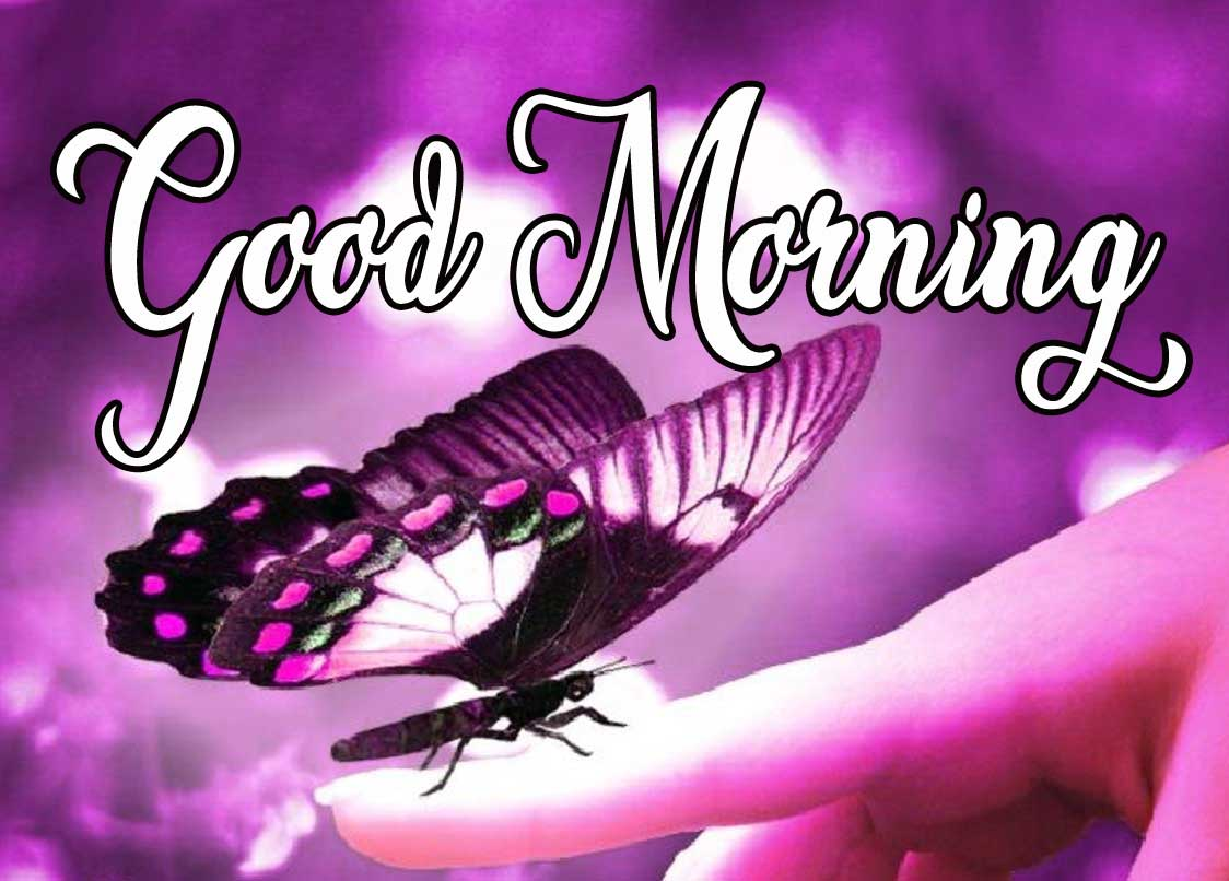 Butterfly Good Morning Pics Download