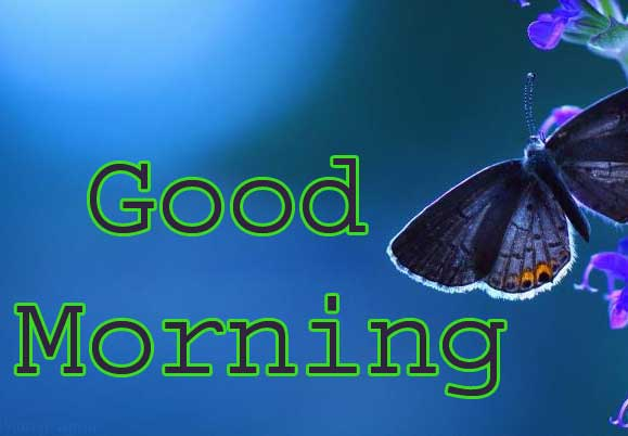 Butterfly Good Morning Wallpaper