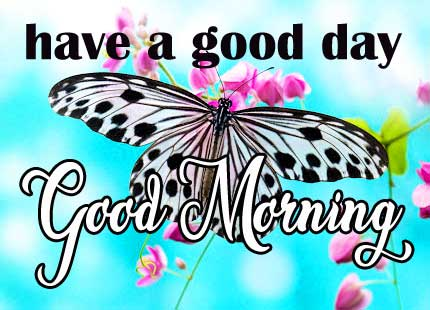 Butterfly Good Morning Pictures HD