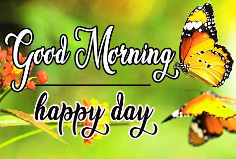 Butterfly Good Morning Pics for Whatsapp