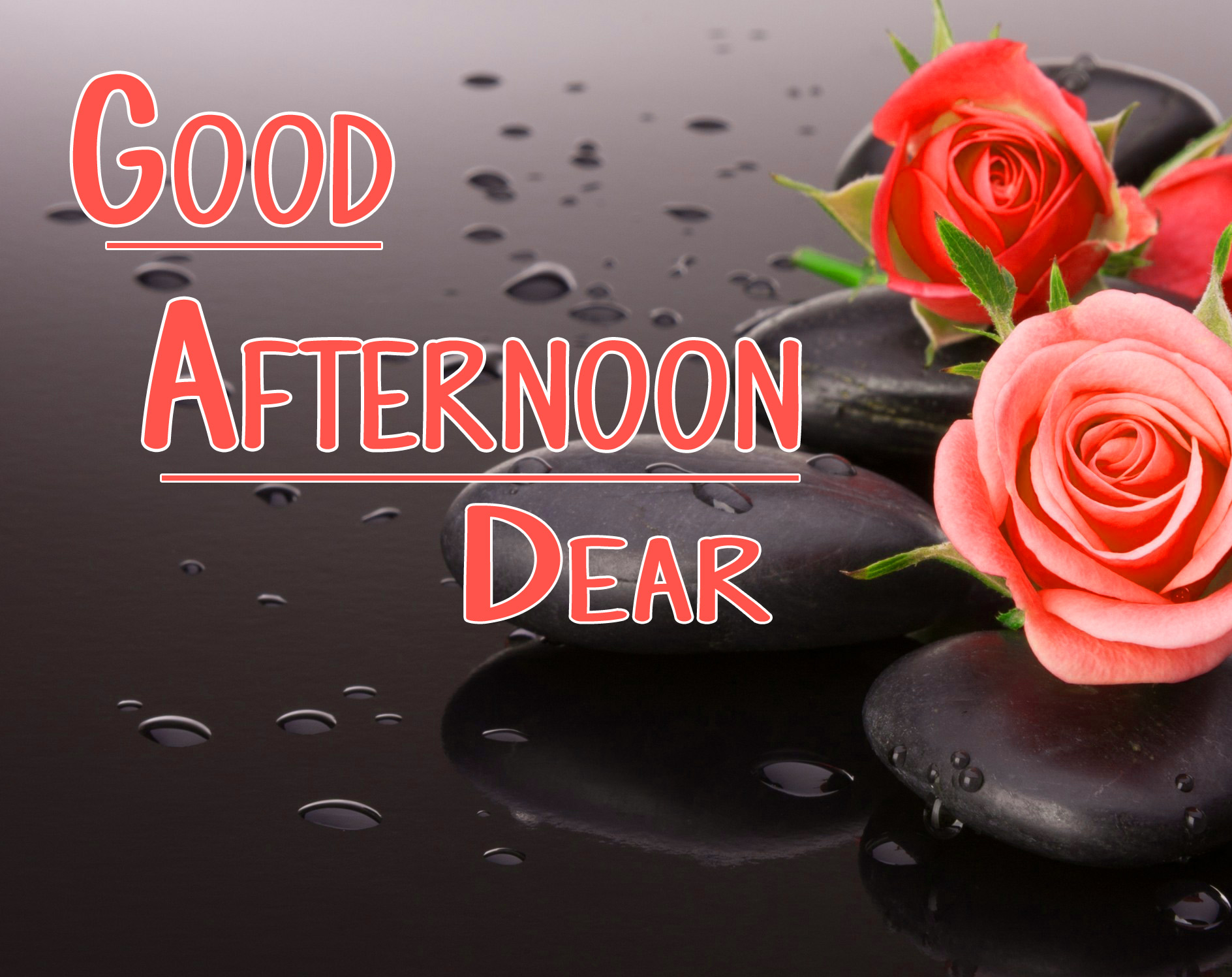 Good Afternoon Images Wallpaper With Rose