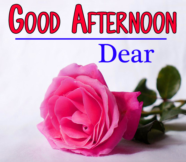 Good Afternoon Images Wallpaper With Rose Free