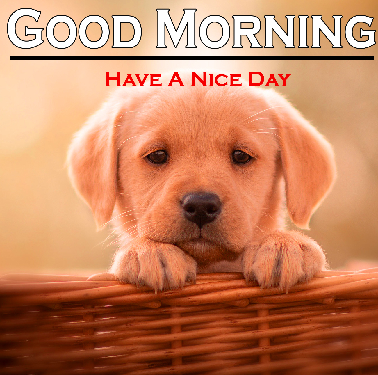 741+ Puppy Good Morning Images Photo Pics Free HD