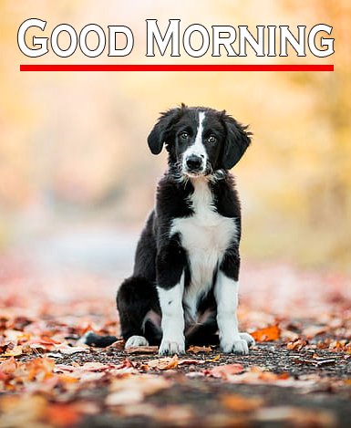 Good Morning Images With Puppy Lover