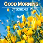 166+ Spring Good Morning Images HD Download