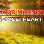 198+ Sunflower Good Morning Images HD Download