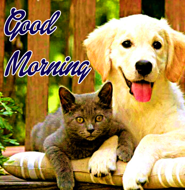 best-cute-good-morning-images-for-friend