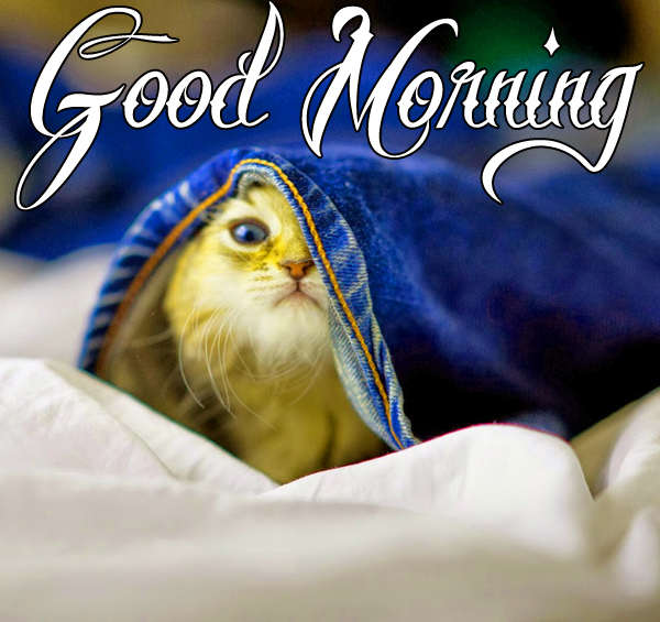best-funny-good-morning-images-for-cute-hd-download-1