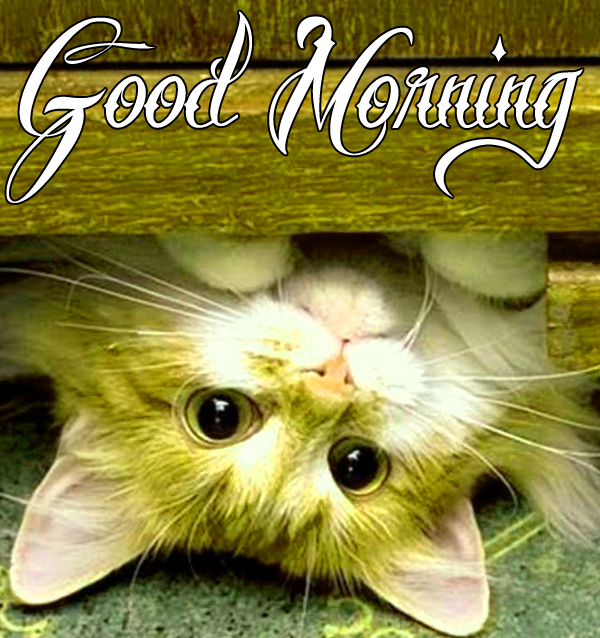 best-funny-good-morning-photo-for-cute-profile-hd-1