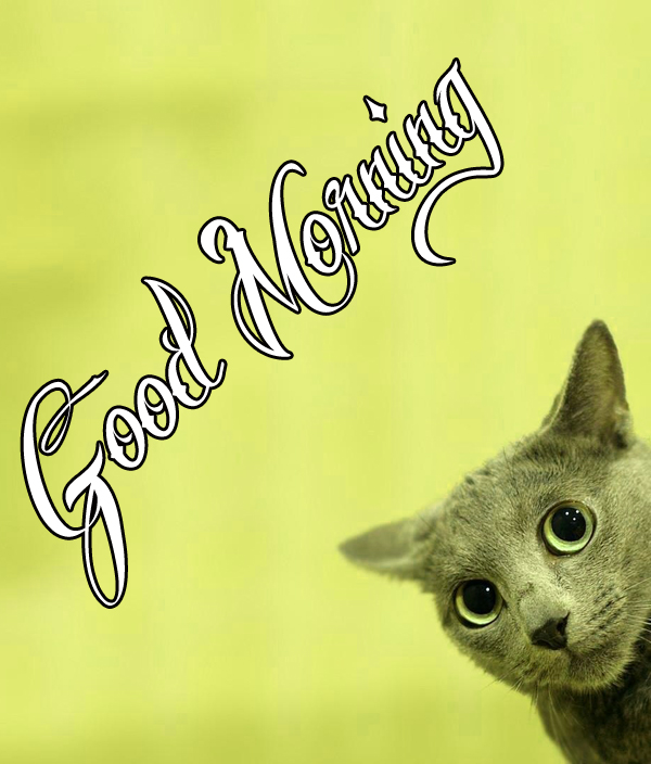 best-funny-good-morning-photo-for-facebook-hd-download-1
