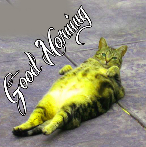cat-hd-funny-good-morning-photo