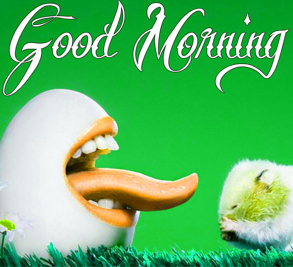 funny-good-morning-images-for-facebook-hd-1