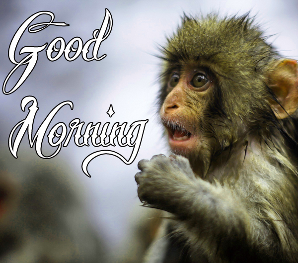 funny-good-morning-photo-for-cute-free-download