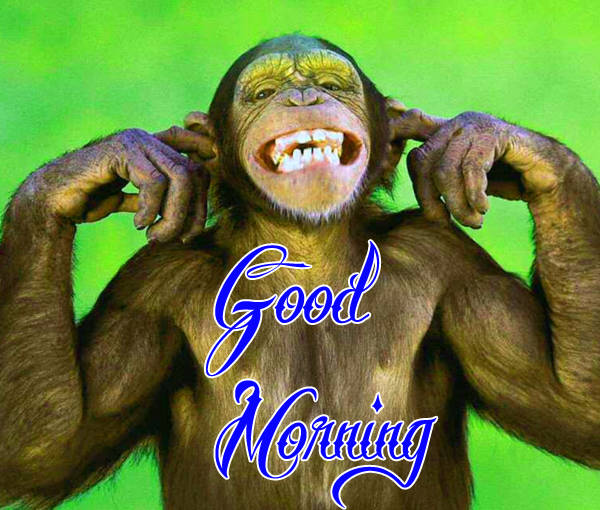 funny-good-morning-photo-for-cute-profile-free-download