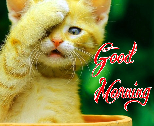 funny-good-morning-photo-for-cute-profile-hd