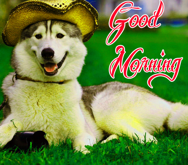 funny-good-morning-photo-for-facebook-hd-download
