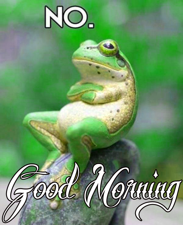 funny-good-morning-photo-for-whatsapp-dp-free-download
