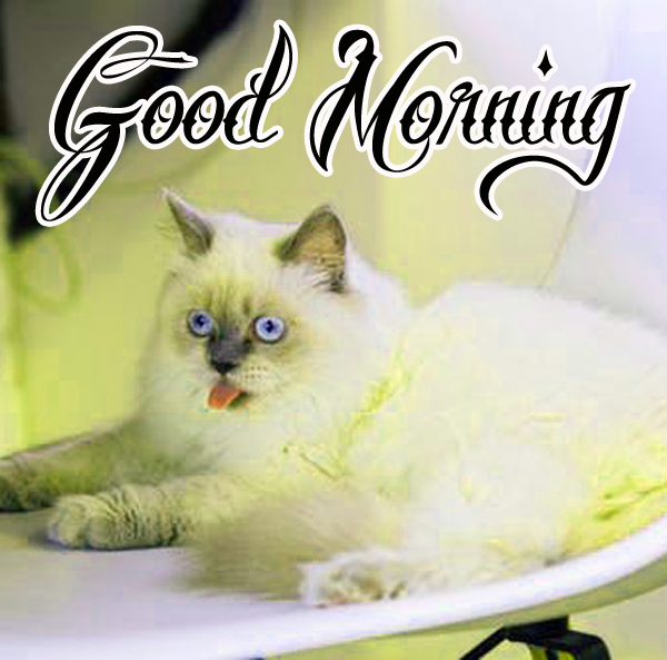funny-good-morning-pics-for-cute-hd