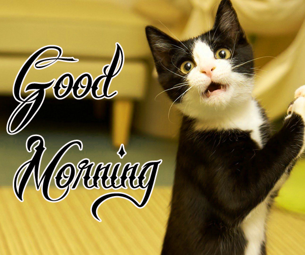 funny-good-morning-pics-for-facebook-profile-hd