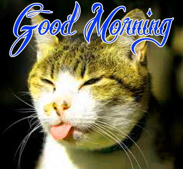 funny-good-morning-wallpaper-for-amazing-hd