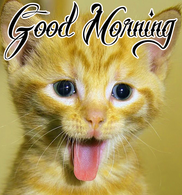 funny-good-morning-wallpaper-for-cute-free-download