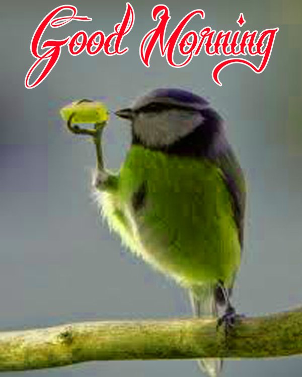 funny-good-morning-wallpaper-for-cute-profile-free-download