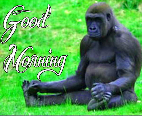 funny-good-morning-wallpaper-for-friend-profile-hd