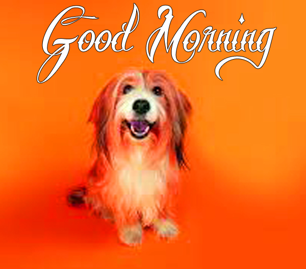 funny-good-morning-wallpaper-for-love-profile-hd