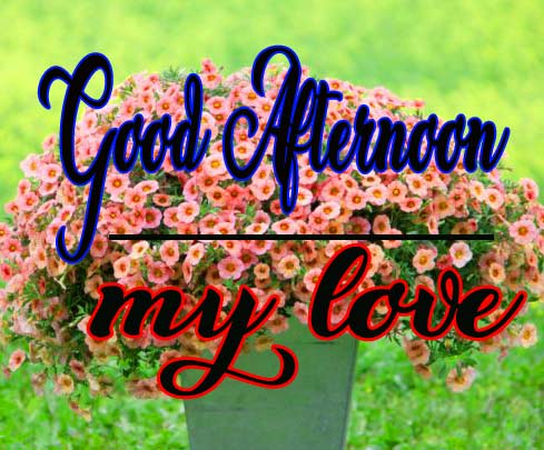 Good Afternoon Photo Free Download