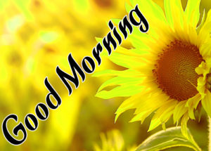 Sunflower Good Morning Photo for Facebook Free Download