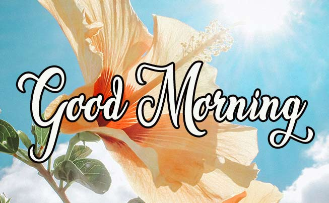 Happy good morning Photo Free Download