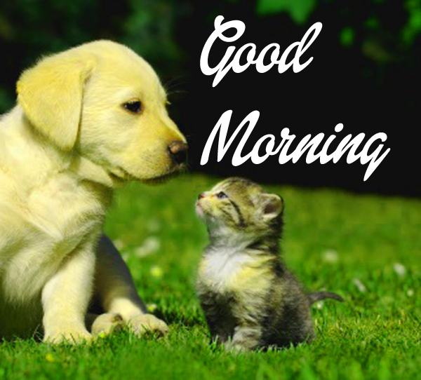 good-morning-images-for-friend-cute-hd