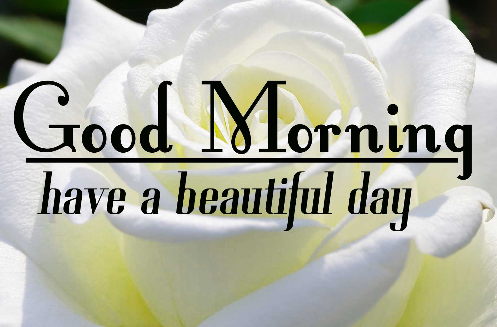 Special Good Morning Wallpaper Free Download