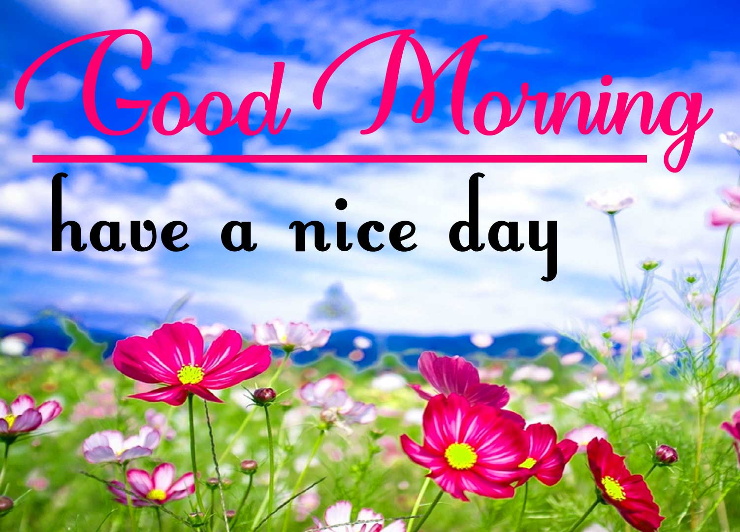 Special Good Morning Pics Free With Flower