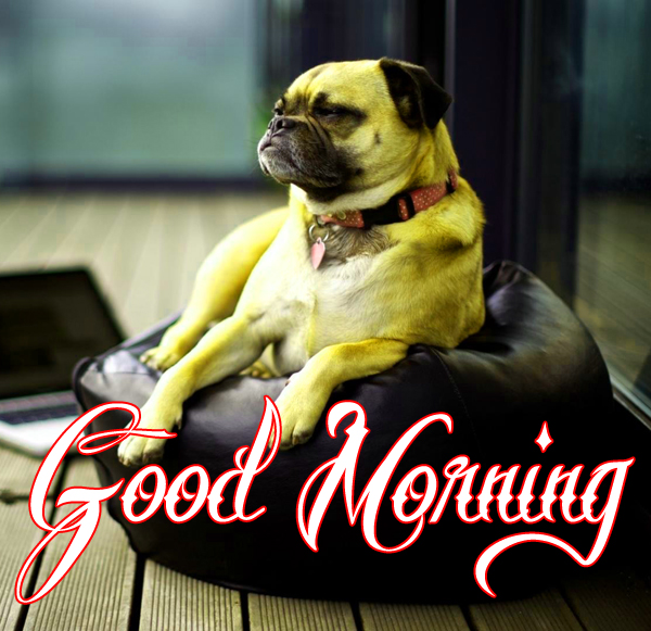 latest-funny-good-morning-photo-for-facebook-hd-download