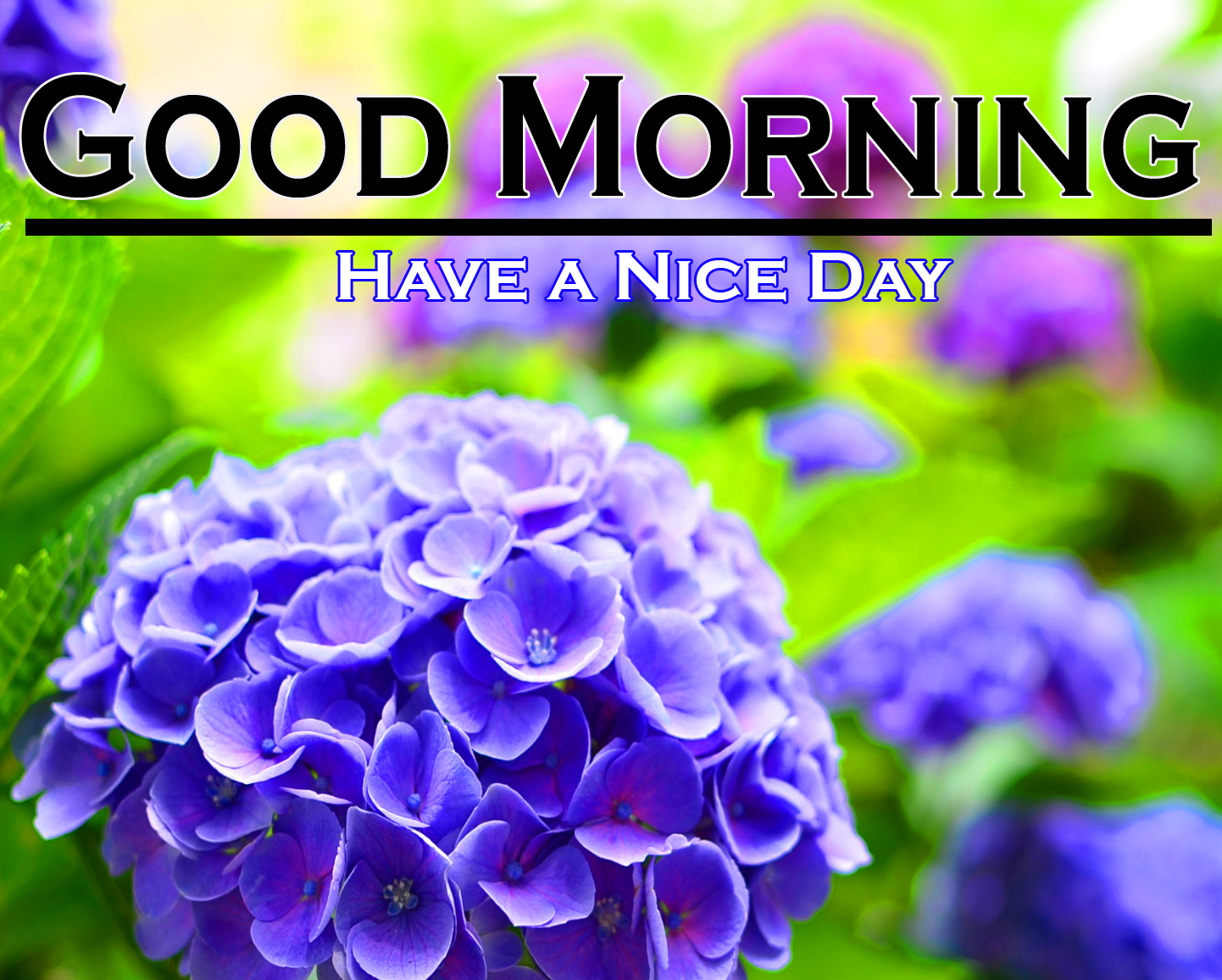 Flower Good Morning Pics Download for Whatsapp