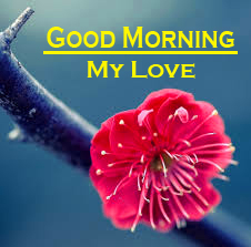 Flower Good Morning Pics Pictures Download