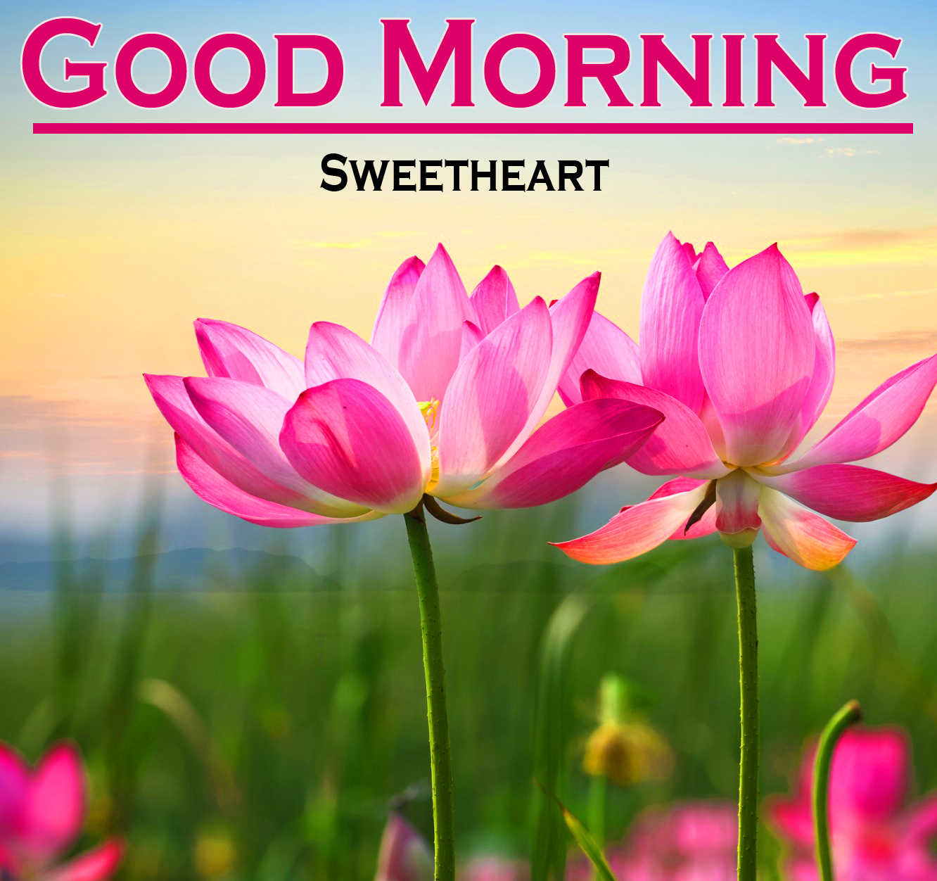 Flower Good Morning Pics Images Download