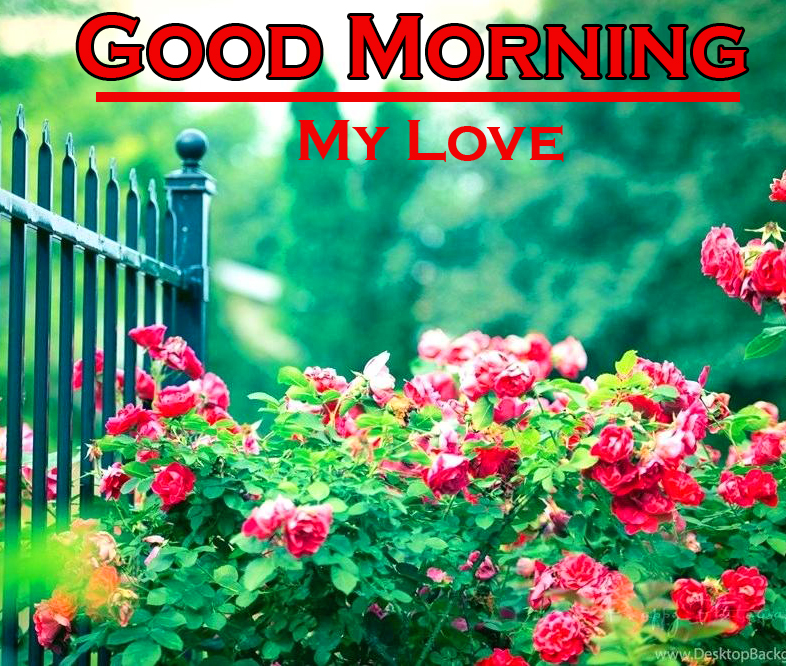 Free Flower Good Morning Pics Images Download