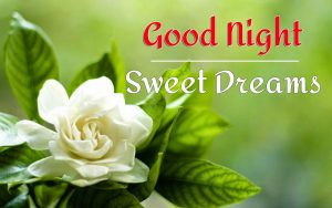 best beautiful good night images pictures pics free hd