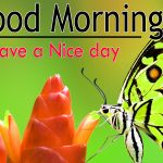 Butterfly Good Morning Wishes Images