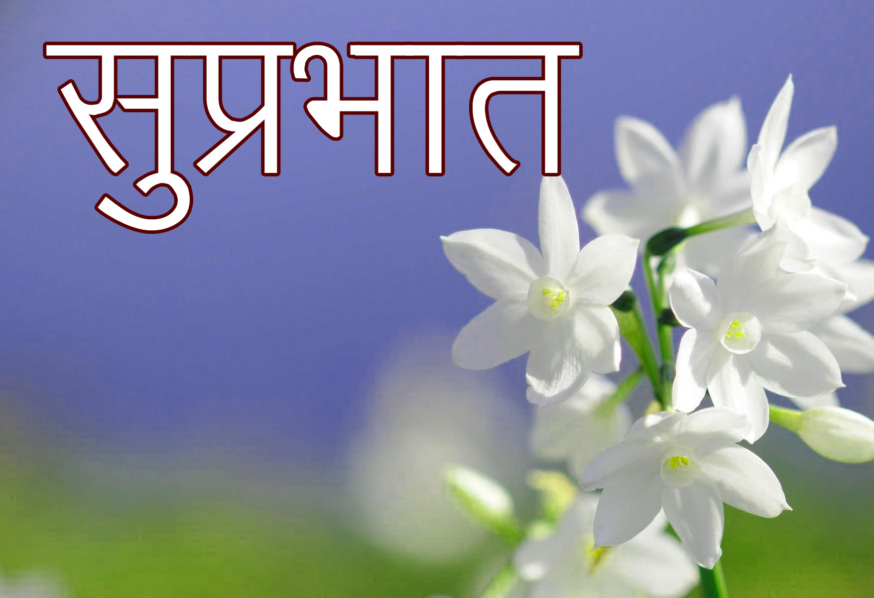 Friend-Flower-Suprabhat-Images-1