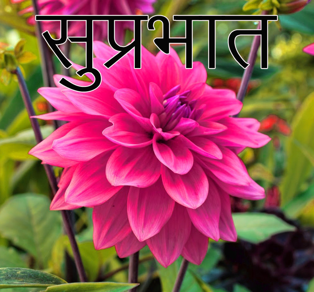 Friend-Flower-Suprabhat-Images-10