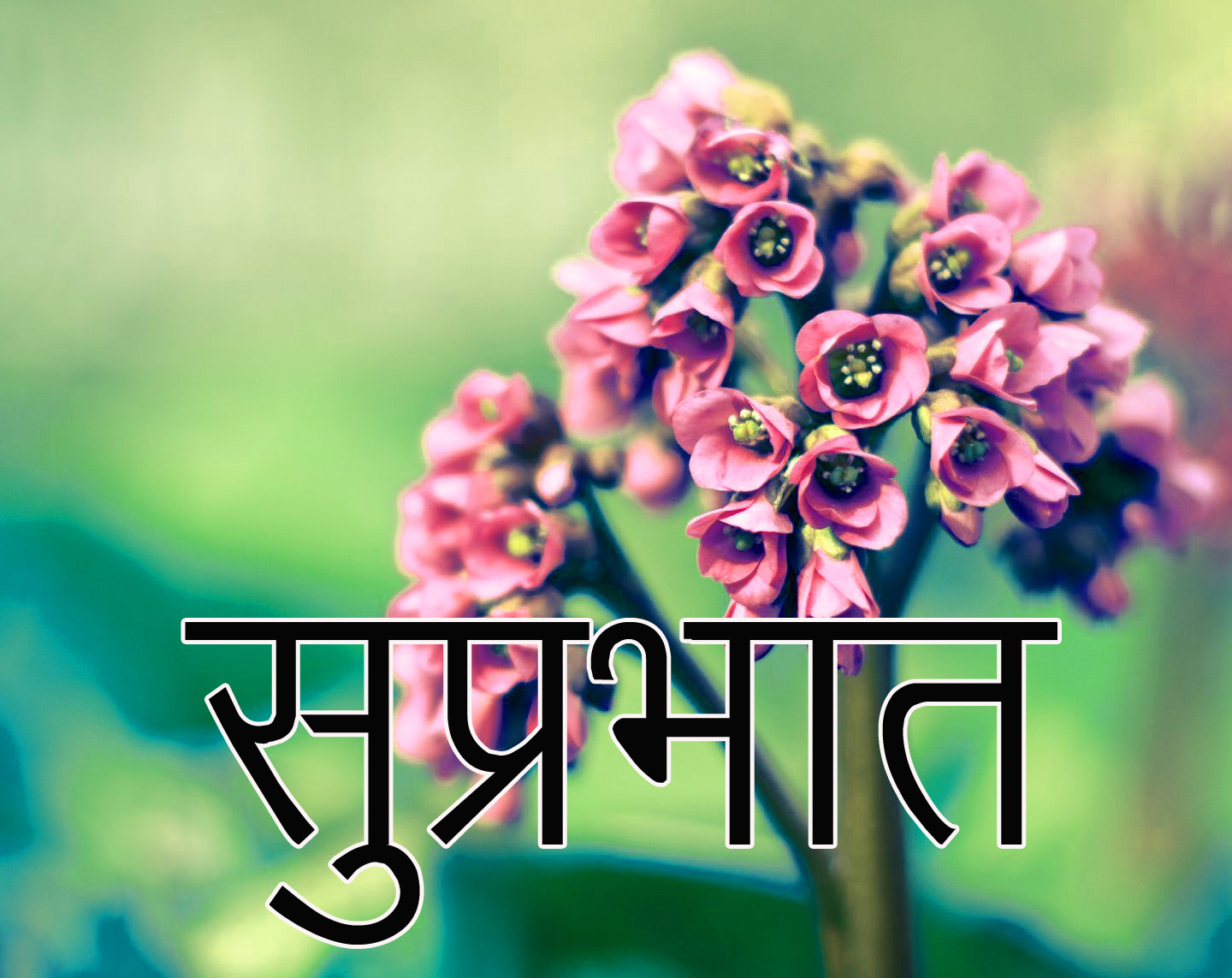 Friend-Flower-Suprabhat-Images-16