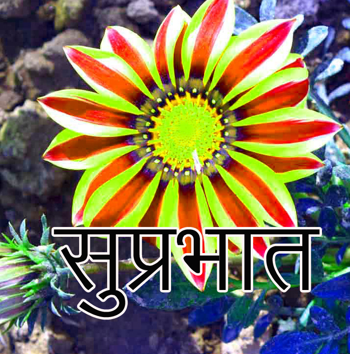 Friend-Flower-Suprabhat-Images-17