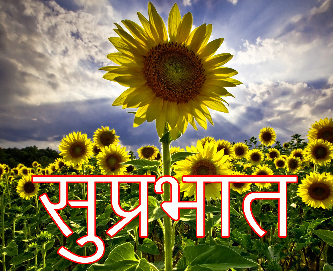 Friend-Flower-Suprabhat-Images-18
