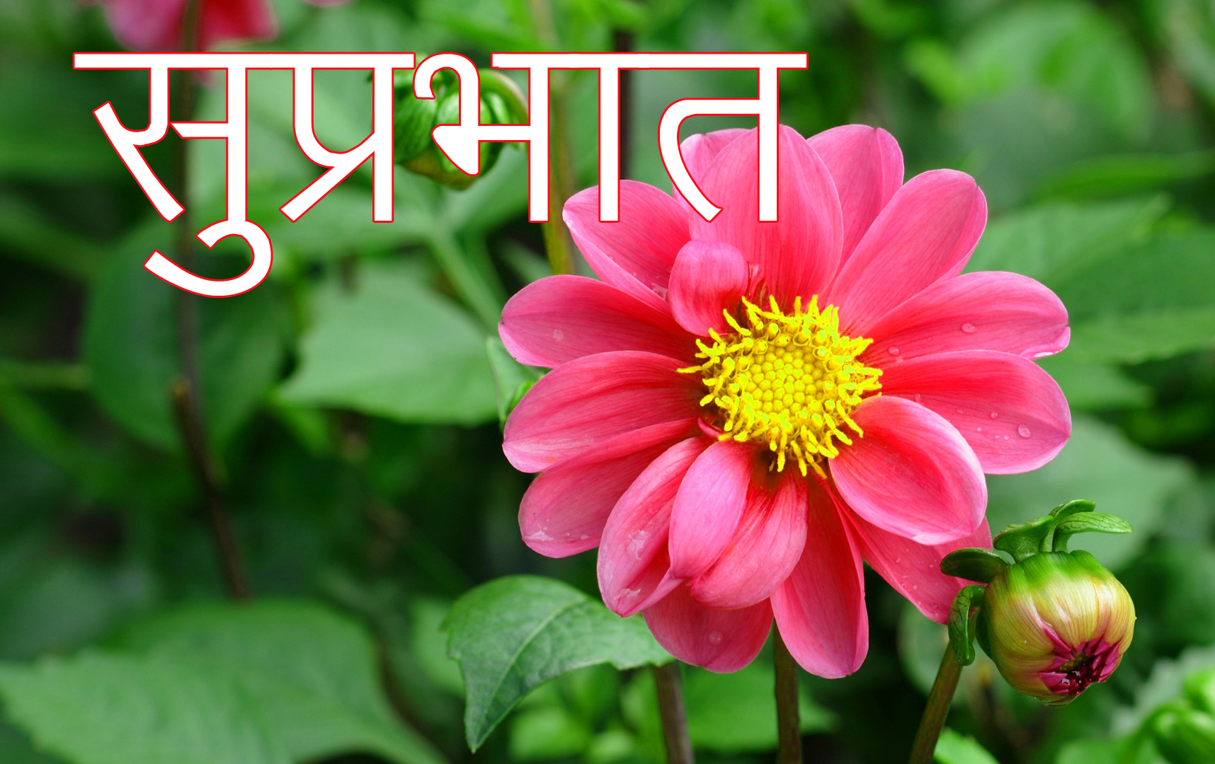Friend-Flower-Suprabhat-Images-2
