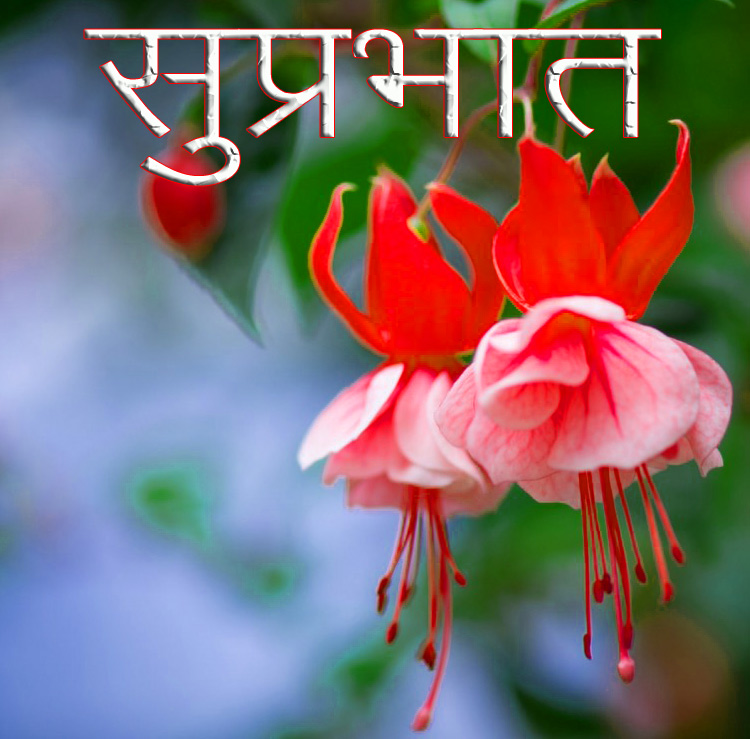 Friend-Flower-Suprabhat-Images-21