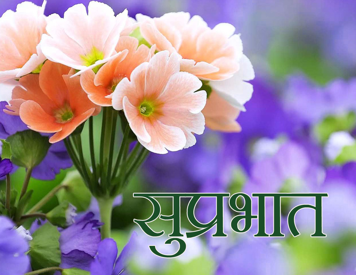 Friend Flower Suprabhat Images